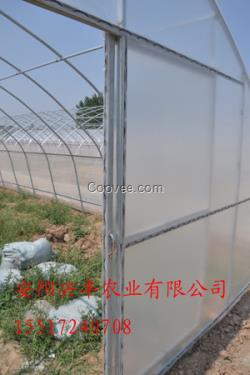 塑料大棚坚固耐用 塑料大棚建造价格低