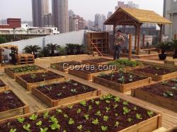 重庆家庭菜园-阳台种菜-屋顶花园种菜图片