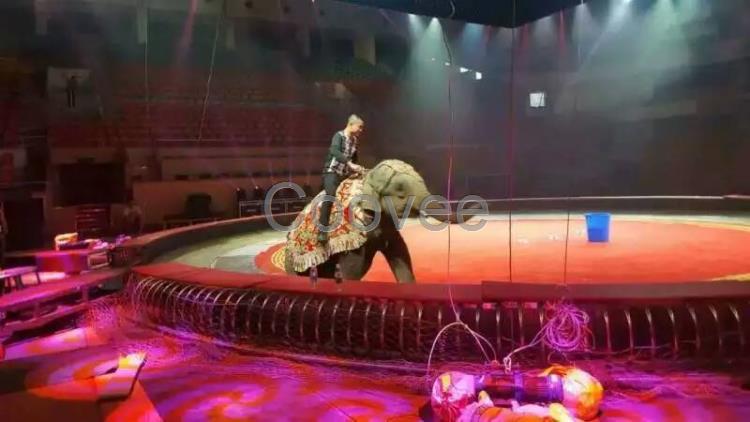 和忠诚的合作伙伴正规马戏团表演节目出租动物杂技表演马戏团整套租赁