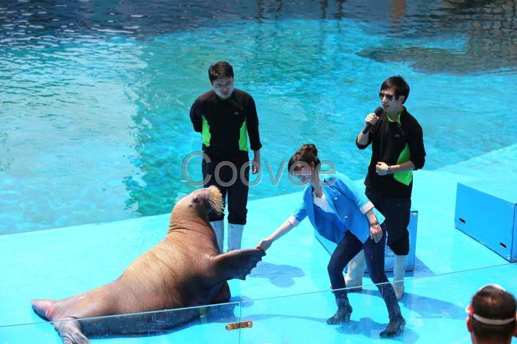 海洋生物展整套出租活体企鹅出租海狮表演海洋主题