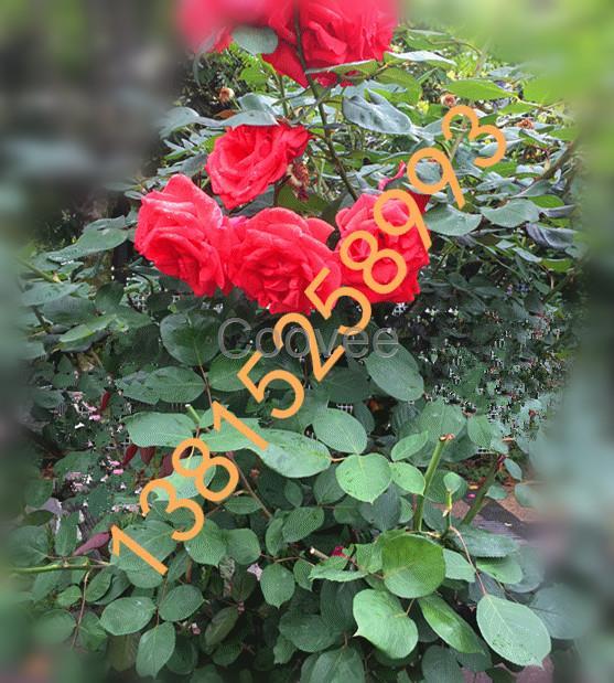 花红柳绿之季,品茶尝果农家乐;   地址:苏州市吴中区光福镇潭东村高家