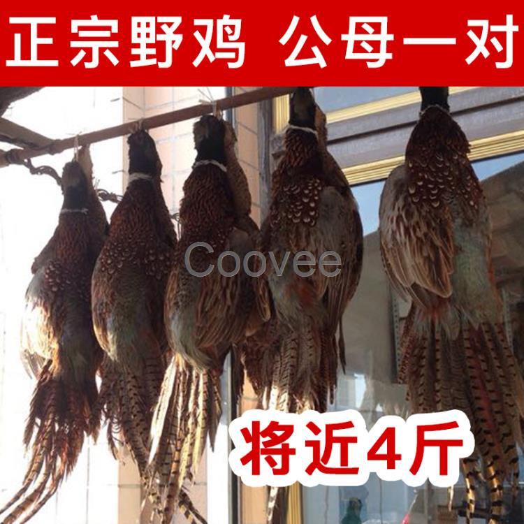 狍是经济价值比较高的兽类之一,也是东北林区最常见的野生动物之一.