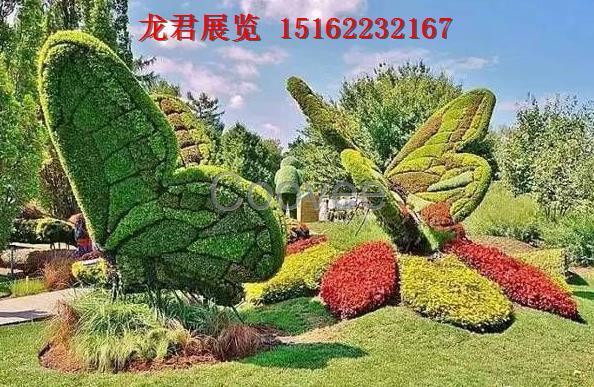 象梧桐树叶的花卉